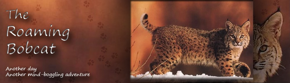 The Roaming Bobcat